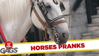 Best Horse Pranks  Best of Just For Laughs Gags