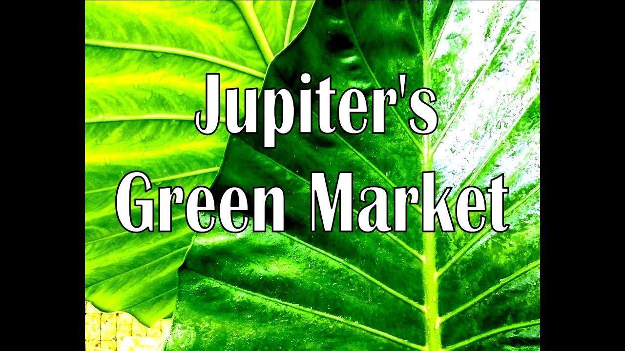 Jupiter\'s Green Market at El Sol - YouTube