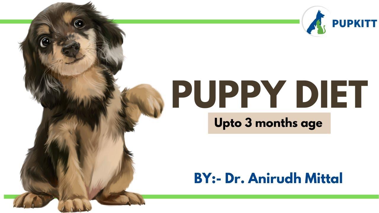 Puppy Diet Chart | Puppy Diet Plan For First 3 Months (90 Days)