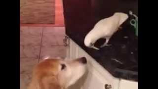 Птица кормит собаку,