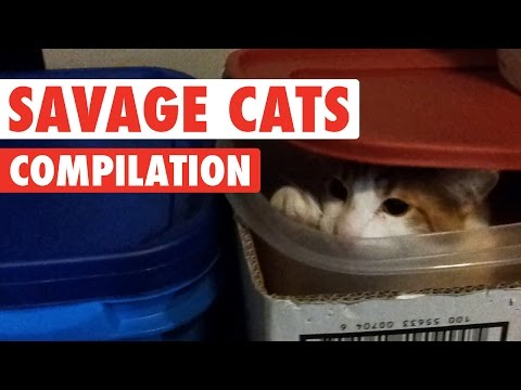 Savage Cats Funny Pet Video Compilation 2016