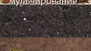 видео: 6_Сидераты и мульчирование