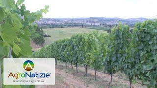 Grape Field Tour 2017, la parola all'agricoltore