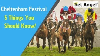 Five top tips for betting and Betfair trading at the Cheltenham festival