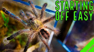 Top 10 Beginner Tarantulas You Are Overlooking