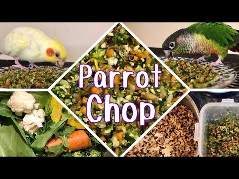 HOW I MAKE MY BIRDS' CHOP | The healthiest food for parrots