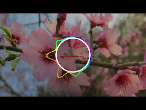 Download Teeje Week – Jordan Sandhu ringtone | Best Ringtones download Free for mobile
