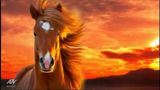Это Пронизывающая Душу Нежная Музыка без Слов для Отдыха от Суеты 💎Antisrtess TV Music