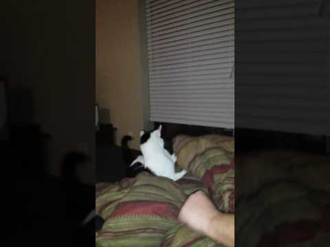 Cat fights owner