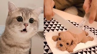 Cute Tik Tok Pets - Cutest Animals on TikTok - Cute Animals