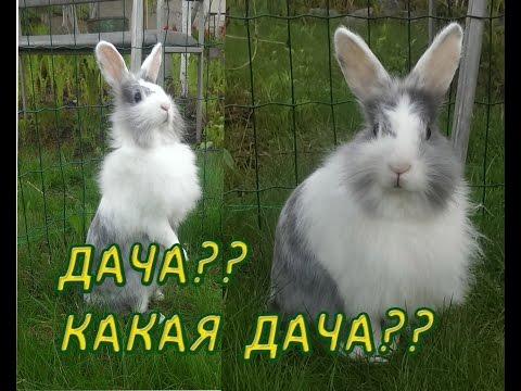 Зая не хочет ехать на дачу))))