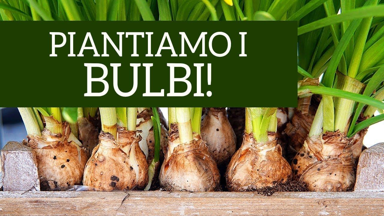 Come Si Piantano I Tulipani come piantare i bulbi autunnali: il metodo giusto! » vendita