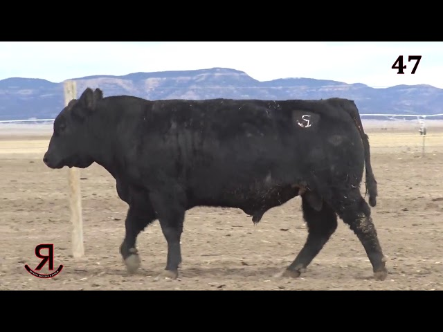 Reverse Rocking R Ranch Lot 47
