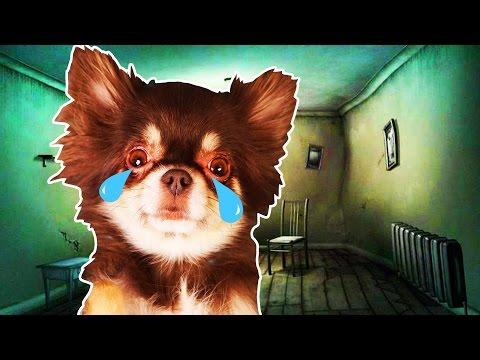 СТРАШНАЯ комната собаки МИШИ!