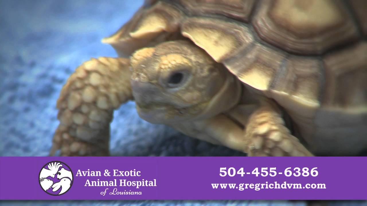 Animal Hospital in Metairie   Avian & Exotic Animal Hospital