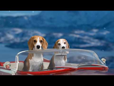 """DOGS IN FLYING CAR ANIMATION """"HARRY POTTER STYLE"""""""