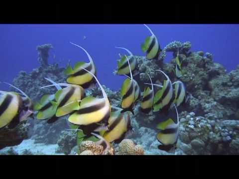 Shaab claudio Mer rouge Egypte