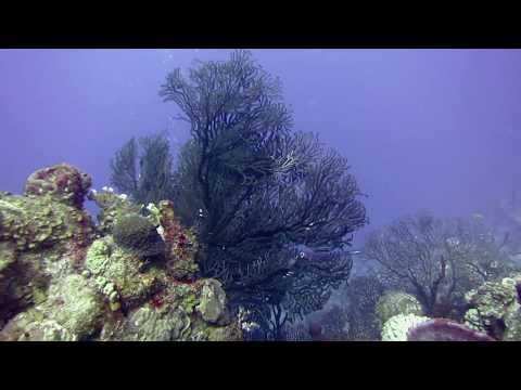 Snorkeling in Cuban Reefs