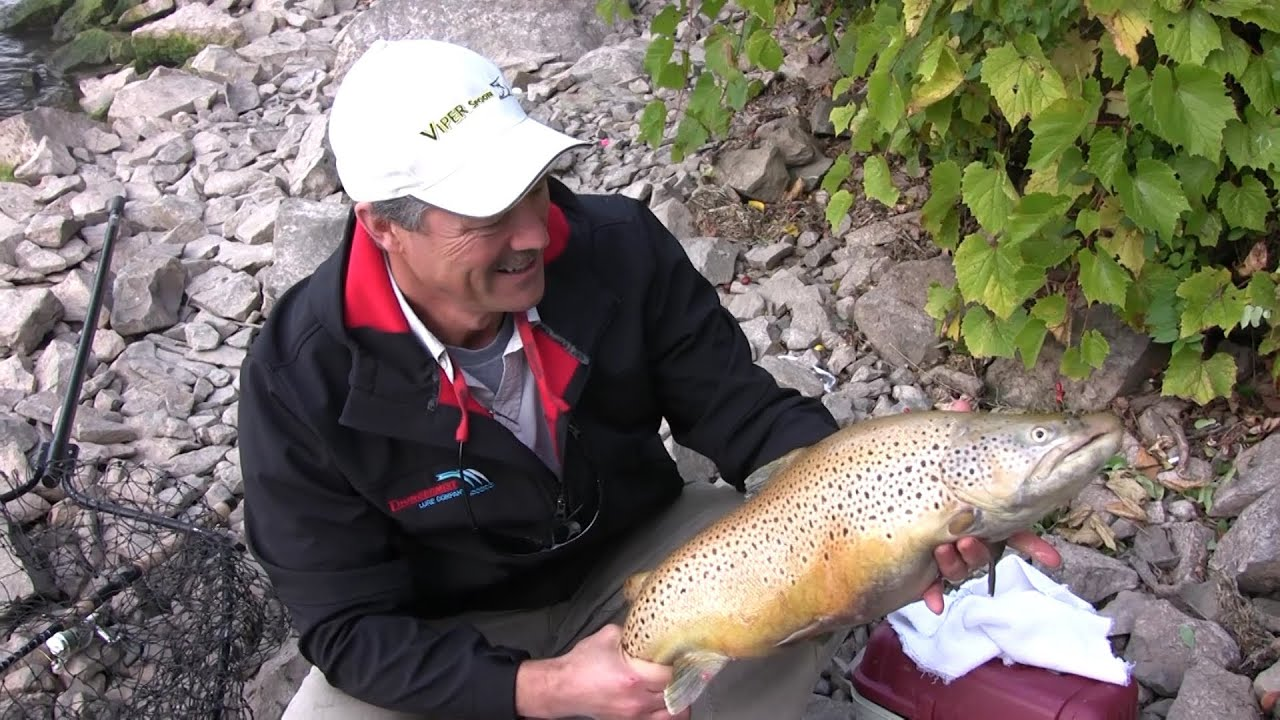 how to catch rainbow trout and brown trout from shore - tips, Fly Fishing Bait