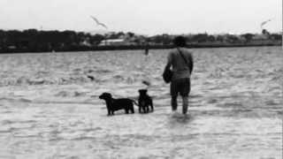 Doggie Beach Altona Melbourne Australia