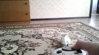 Робот хамелеон Silverlit | Robo Chameleon Silverlit | Игрушка от Деда Мороза