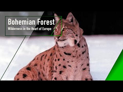 Bohemian Forest - Wilderness in the Heart of Europe - The Secrets of Nature
