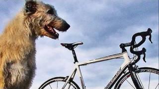 steppenwolf fahrrad test