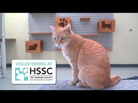 Humane at Heart--Volunteering at HSSC