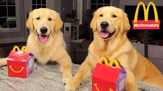 Dogs Eating their First McDonald's HAPPY MEAL!!