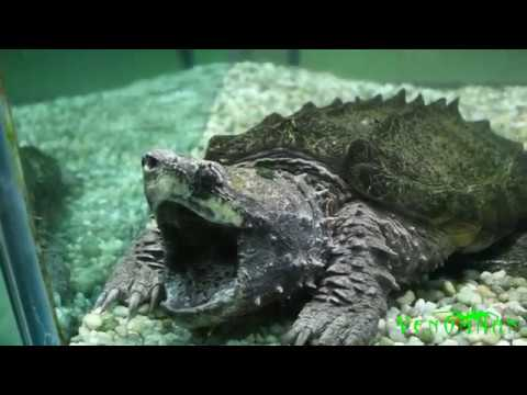 Huge crocodile and venomous snake collection