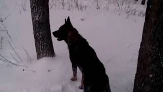 Моя собака.ч2 г курск