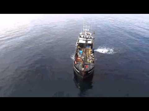 Sitka herring 2016 drone flight