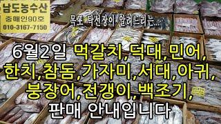 6월2일,제철생선판매,먹갈치,덕대,민어,한치,참돔,암꽃…