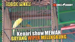 Ini Lho Gaya Show Kenari Yang Disukai Juri Kenari Sego Petir Rizal Babrix Team