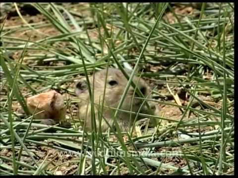 The hole story of a Rodent!!