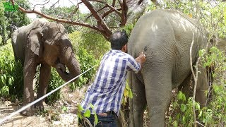 Фото Elephant Visits The Park Border To Get His Own Medical Treatments