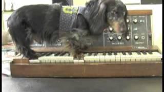 Moog Dog