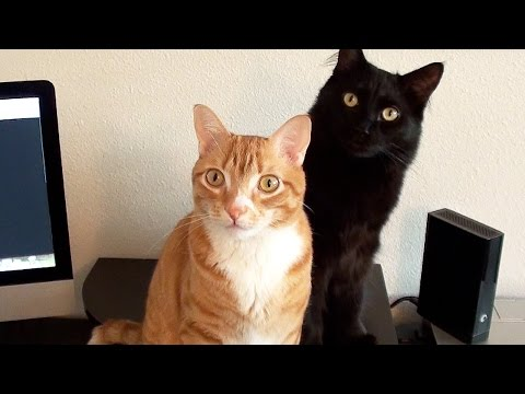 Scientists Create Music for Cats!