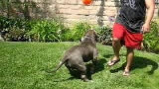big pacman playin in the yard