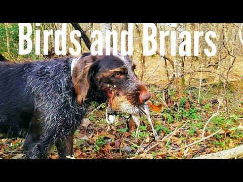 Birds And Briars! North Carolina Quail Hunting