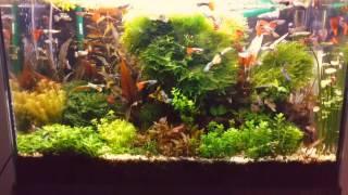 Мои аквариумы  Обзор  Аквариумные растения  Февраль 2017