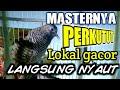 Perkutut Gacor Khusus Masteran Perkutut Malas Bunyi Di Jamin Ampuh  Mp3 - Mp4 Download