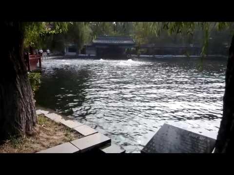 Bai mai spring in Shandong zhang Qiu