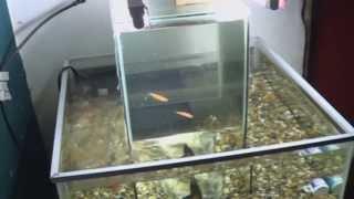 Acuario Invertido Central  360° Grados   Open Bottom Fish Tank