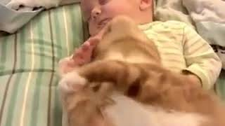 The best baby and cat!!! (Compilation)