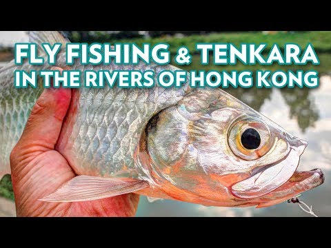 Fly Fishing & Tenkara in The Rivers of Hong Kong