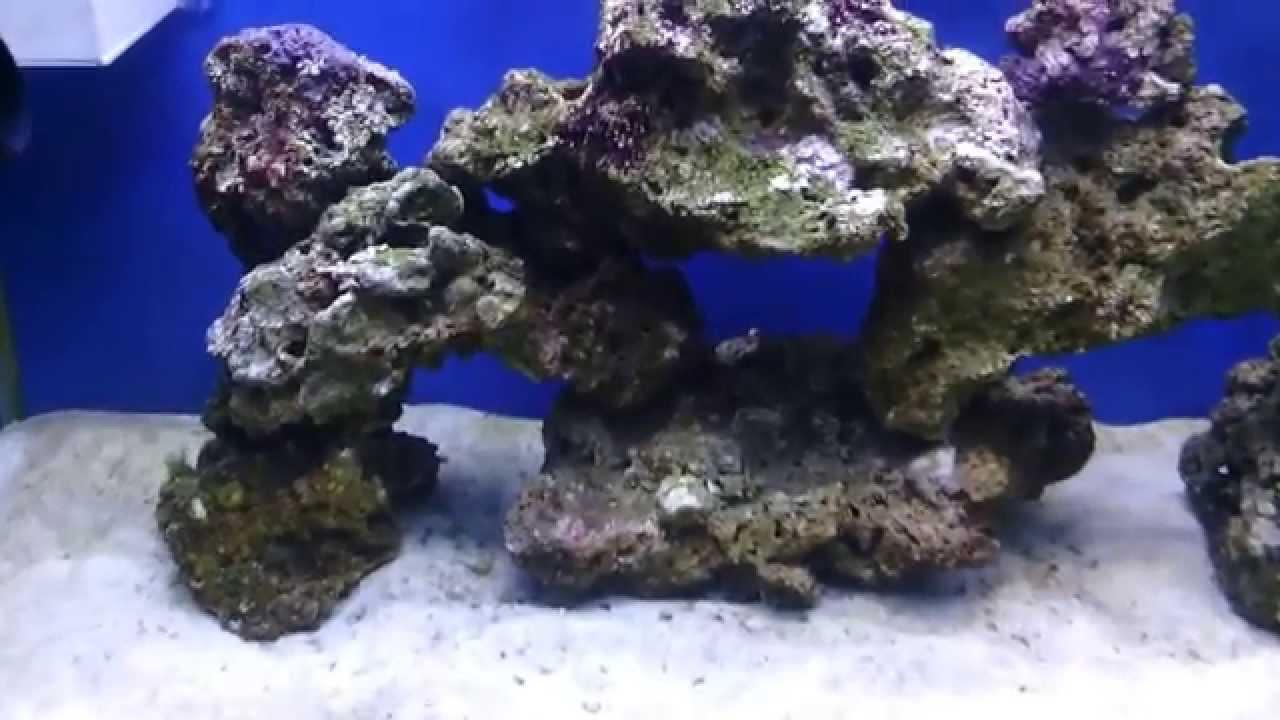Tuzlu su akvaryumu nasıl kurulur