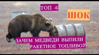 Топ 4 Зависимости у животных. Зачем медведи выпили ракетное топливо?