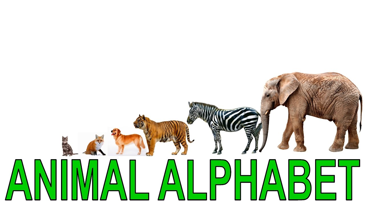 animal alphabet alphabet for children surprise eggs part 3