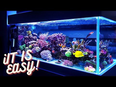 How To Get Crystal Clear Water In Your Fish Tank!